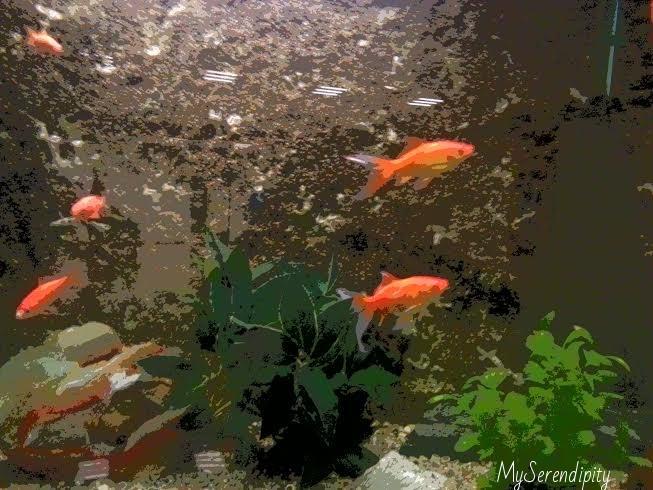 come si sente un pesce rosso in acquario