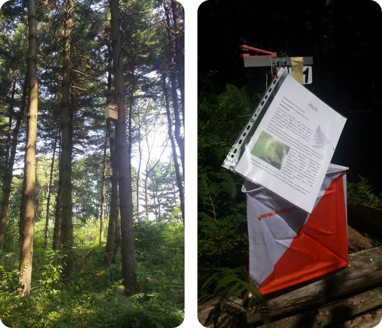 bosco del chignolo