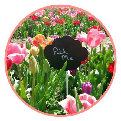 tulipani itliani